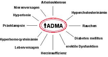 Erkrankungen mit erhöhtem ADMA-Spiegel