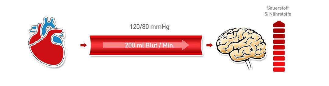 Arterieller Bluthochdruck 1