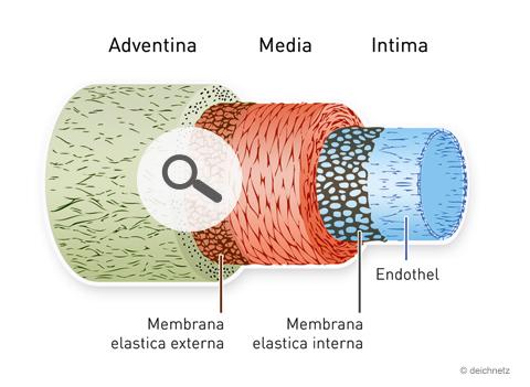 Arginin.de - Adventina Media Intima