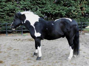 Arginin & Pferde